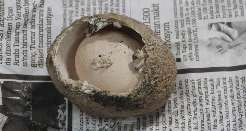 Milyonda bir görülüyor: 4 katmanlı yumurtadan yumurta çıktı