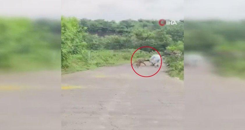 Hindistan'da yolda yürüyen yaşlı adama sırtlan saldırdı