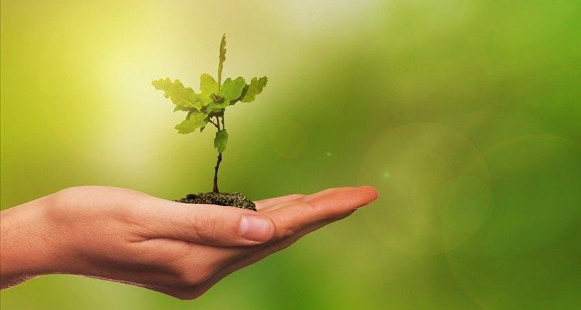 Yeşil Mutabakat'a uyum birçok sektörde köklü değişim gerektiriyor