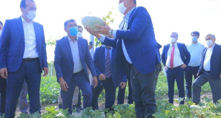 Çavuşoğlu, Özbekistan'da tarladan kavun ve karpuz topladı