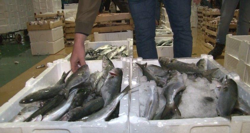 Marmara Denizi'nde lüfer bolluğu balıkçıların yüzünü güldürdü