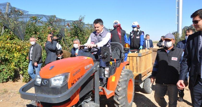 Bakan Pakdemirli, Karaman'da traktör kullanıp elma hasadı yaptı