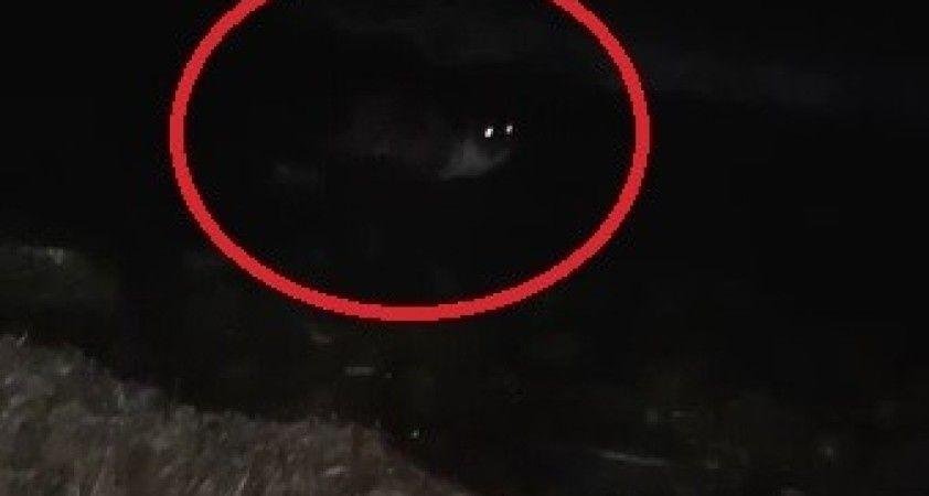 Deniz kıyısında midye yiyen su samuru kameraya yakalandı