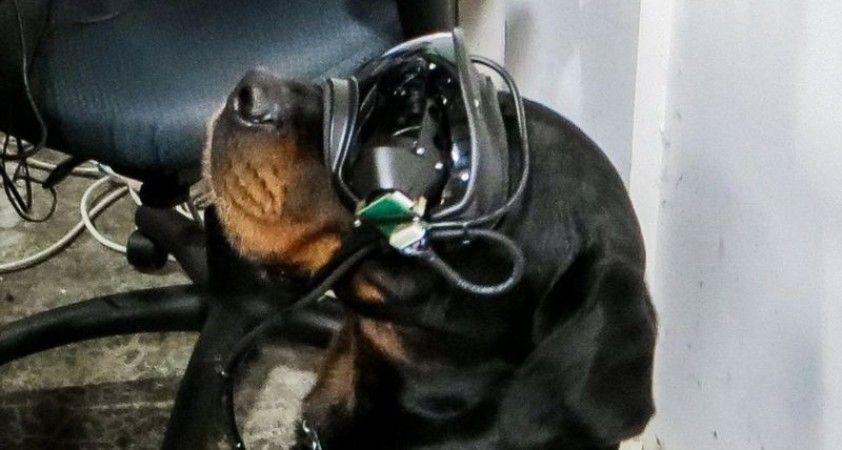 ABD ordusu, patlayıcı arayan köpeklerde artırılmış gerçeklik teknolojisini deniyor