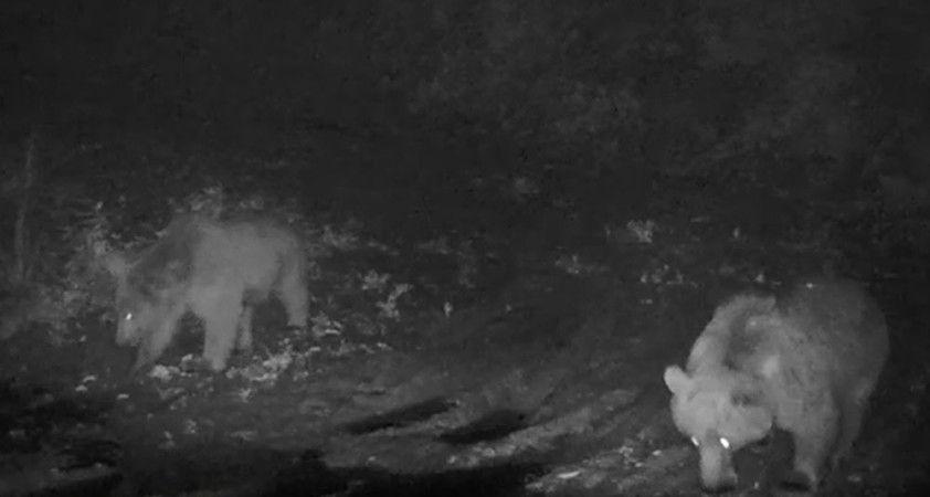 Yaban hayvanları foto kapanlara takıldı