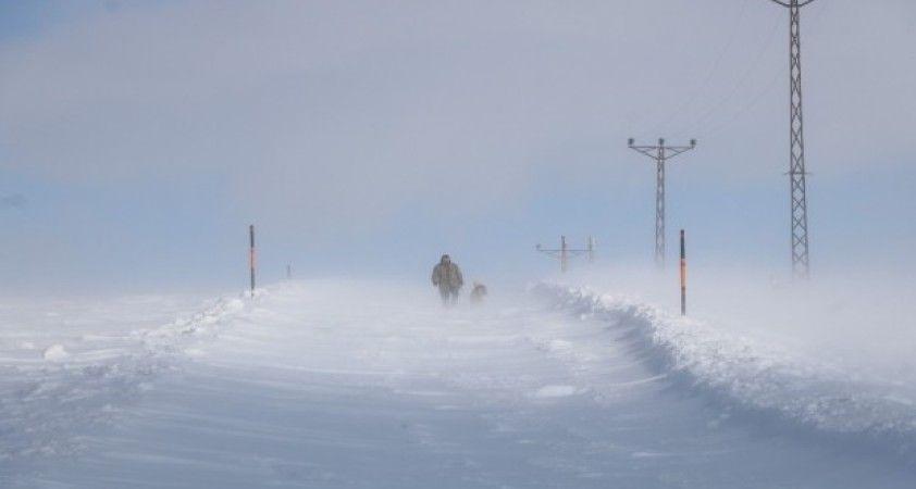 Kurtların korkulu rüyası kangallar, Sibirya soğuklarında eğitiliyor
