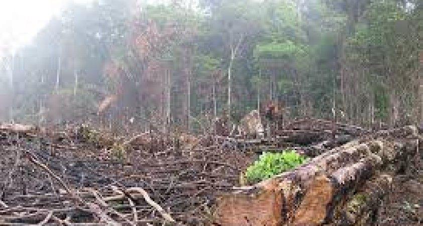 Amazon'da yasa dışı ağaç kesimi Brezilya kabinesinde istifa getirdi