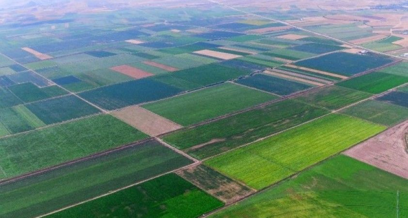 Ziraat profesöründen 'tarımsal üretim seferberliği' çağrısı
