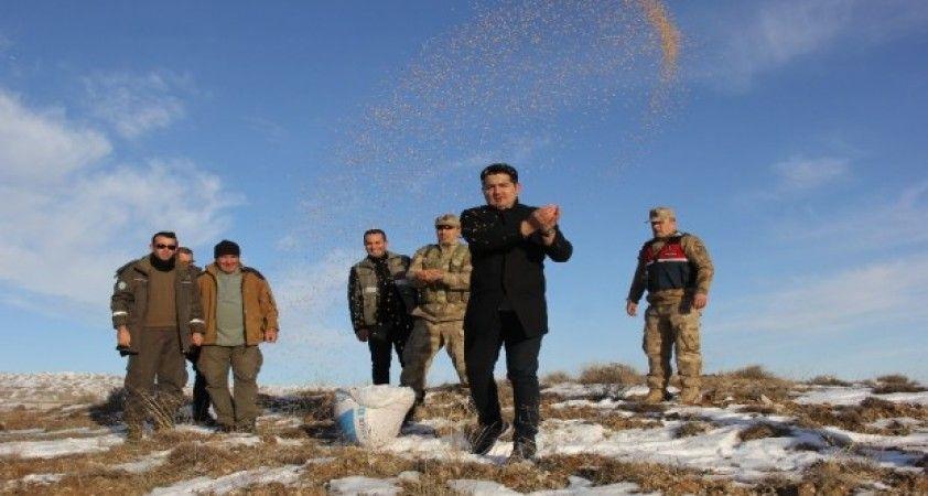Sivas'ta yaban hayatı unutulmadı