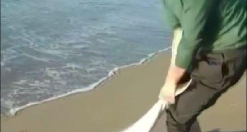 Oltası kopmasın diye 7 kiloluk balığı sürüyerek getirdi