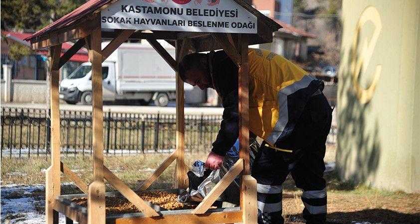 Kastamonu Belediyesi  sokak hayvanlarını unutmuyor