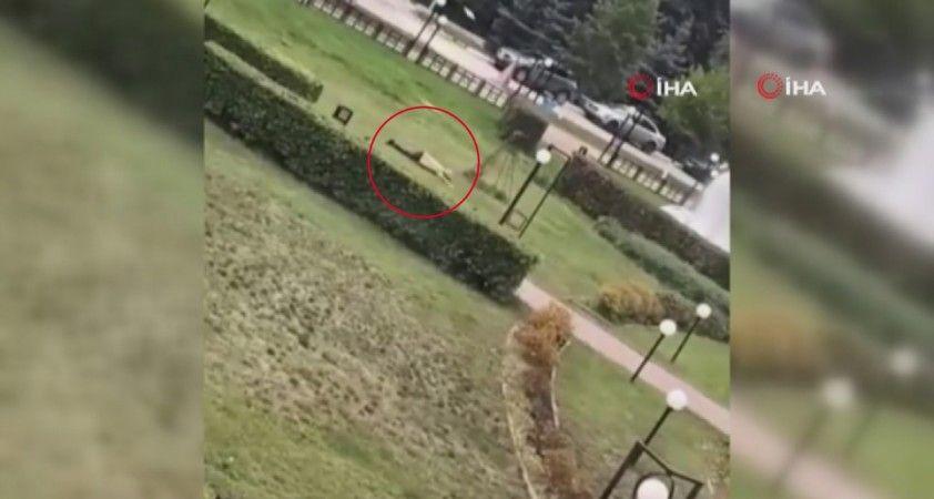 Rusya'da bir üniversitede silahlı saldırı: 3 ölü