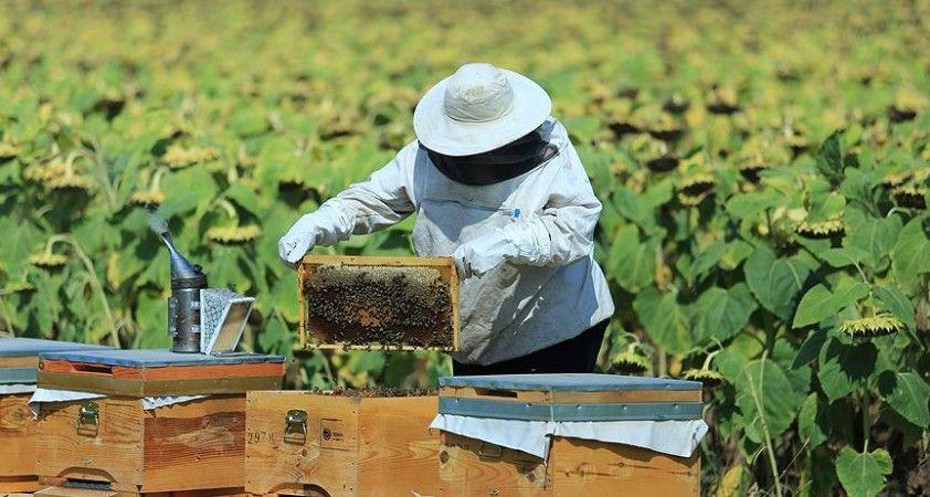 Bakanlıktan arıcılık, ipek böcekçiliği, kaz ve hindi yetiştiriciliği yatırımlarına destek