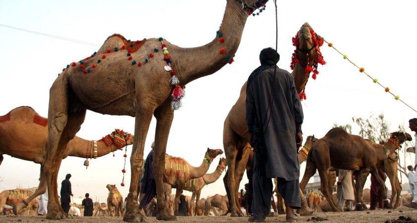 Pakistan'da Kurban Bayramı hazırlıkları sürüyor