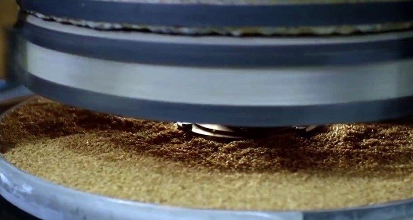 Cumhuriyetin 100'üncü yılına 2 bin yıllık Ahmet Buğdayı tohumu